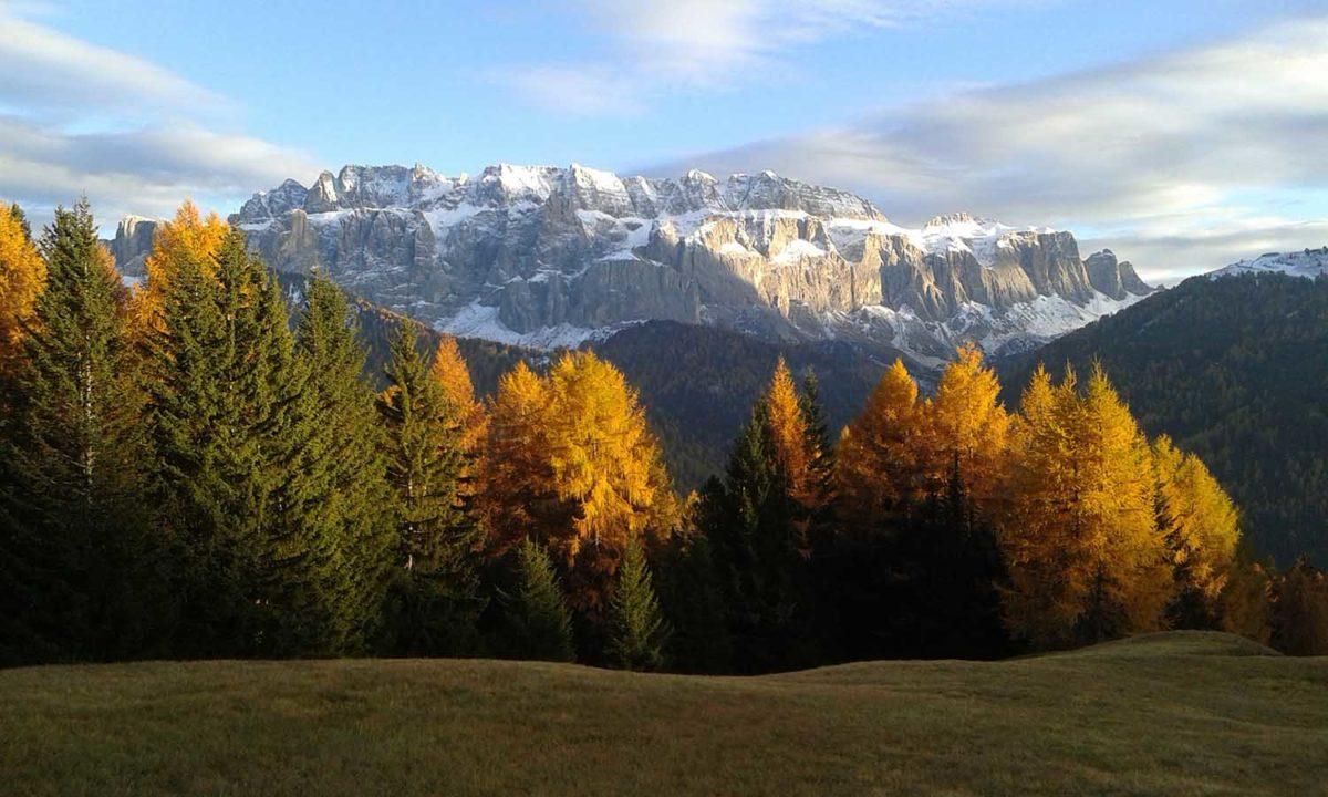 Lärchen im Herbst mit dem Sellamassiv - Larici in autumn con lo Afonso il massiccio del Selva - trees in autumn with the Sella mountain - Burning Dolomites - in Val Gardena